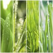 La hierba con gotas de agua — Foto de Stock