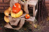 Pumpkins on wooden ladder — Stock Photo