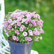 Lilac flowers on wicker chair — Stock Photo #57970927