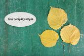 Blätter auf hölzernen hintergrund — Stockfoto