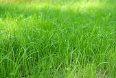 Beautiful spring grass outdoors — Stock Photo