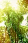 красивые деревья в лесу — Стоковое фото