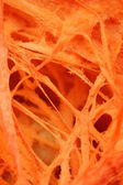 Close up of pumpkin background — Stock Photo