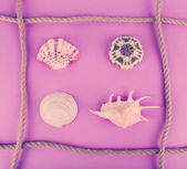 Sea shells souvenirs and rope — Stock Photo