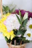 Flowers in basket on white background — Stock Photo