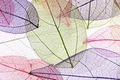 装飾的なスケルトンの葉 — ストック写真