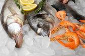 新鮮な魚やシーフード — ストック写真