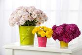 Vackra buketter av blommor — Stockfoto
