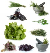 Fresh herbal collage — Stock Photo