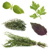 Fresh herbal collage — Stock Photo