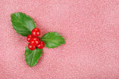 European Holly with berries — Stock Photo