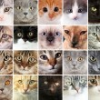 Cat faces collage — Stock Photo #60922289