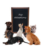 Pet adoptions concept — Stock Photo