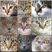 Cat faces collage — Stockfoto