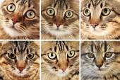 Cat faces collage — Stock Photo