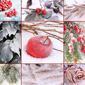 Collage of frozen plants on snow, close up — Stock Photo
