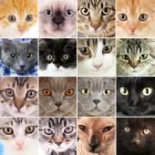 Söt katt ansikten collage — Stockfoto