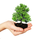 Small tree in hand isolated on white — Stock Photo