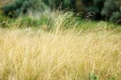 Beautiful meadow with spikelets — Stock Photo