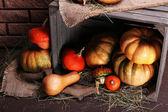 Pumpkins in crate on floor — Stock Photo