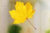 Autumn leaf on window glass — Stock Photo