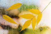 Autumn leaves on window — Stock Photo