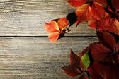 Beautiful autumn leaves — Stock Photo