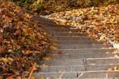 Stone steps in park — ストック写真