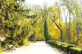 Beautiful autumn trees in park — Stok fotoğraf
