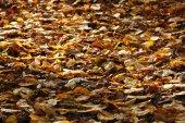 Vackra höstlöv — Stockfoto