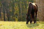 Beautiful brown horse — Stock Photo