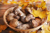 Wild mushrooms and autumn leaves in basket on bright background — Stock Photo