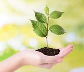 Plant in hand — Stockfoto