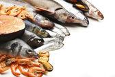 Fresh catch of fish — Stock Photo