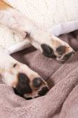Dog paws on bed — Stock Photo