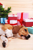 Beagle dog with Christmas gifts — Stock Photo