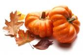 Ripe pumpkin isolated on white — Stock Photo