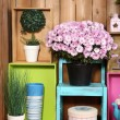 Beautiful colorful shelves with different home related objects on wooden wall background — Stock Photo #61089059
