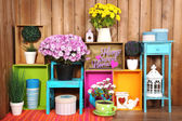 Beautiful colorful shelves with different home related objects on wooden wall background — Stockfoto