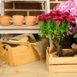 Flowers in wooden box, pots and garden tools on bricks background. Planting flowers concept — Zdjęcie stockowe #61211881