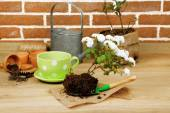 Flowers in pot and potting soil — Stock Photo
