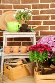 Flowers in wooden box, pots and garden tools on bricks background. Planting flowers concept — Stock Photo