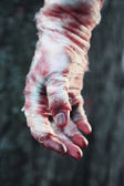 Hand of scary mummy — Stock Photo