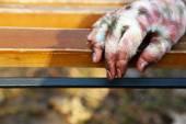 Hand of scary mummy — Stock Photo
