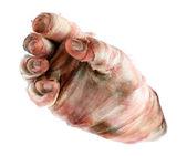 Hand of mummy in bandage — Foto de Stock