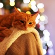 Red cat at home in Christmas time — Stock Photo #61220473