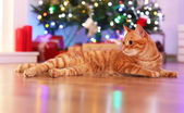 Red cat at home in Christmas time — 图库照片