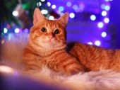 Red cat at home in Christmas time — Stock Photo