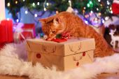 Red cat with Christmas gift — 图库照片