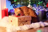 Red cat with Christmas gift — Stock Photo